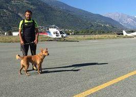 Unità cinofile partono per le zone colpite da terremoto nel Centro Italia