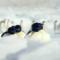 Antarctica, sur les traces de l'empereur