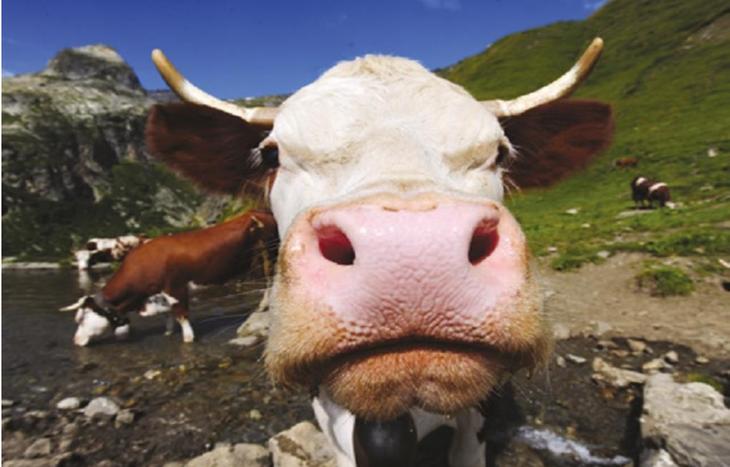 La Thuile - fiera del bestiame