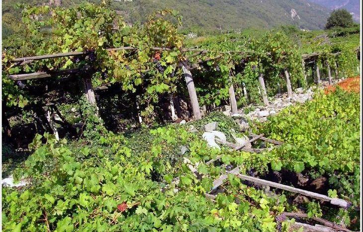 La viticoltura di montagna