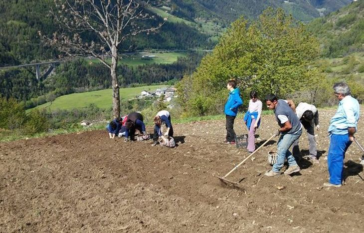 I ragazzi di Forrest Gump alle prese con la coltivazione delle patate