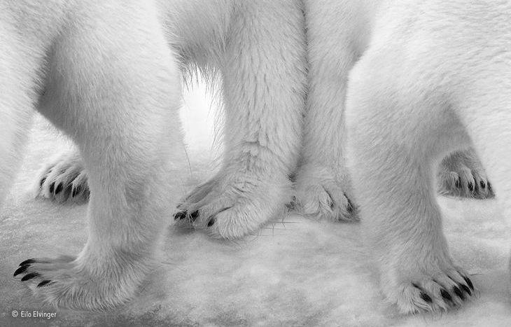 Polar pas de deux - Eilo Elvinger