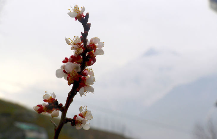 Primavera, gemme, fiori, fiore